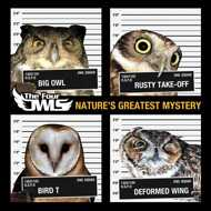 The Four Owls - Natures Greatest Mystery (Orange Colored Vinyl)